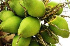 Kokosnüsse Lizenzfreie Stockfotos