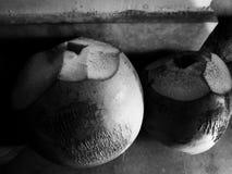 kokosnüsse stockfoto