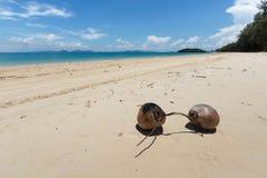 Kokosnüsse auf dem Strand Stockbild