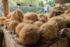 Kokosnüsse auf einem Stand Stockbild