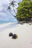 Kokosnüsse auf einem tropischen weißen Sand-Strand Stockbilder
