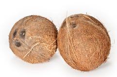 Kokosnüsse auf einem weißen Hintergrund Stockbilder