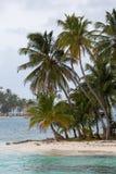Kokosnüsse auf Paradiesinsel Stockfotos