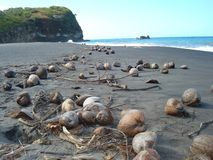 Kokosnüsse auf Strand Stockbilder