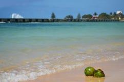 Kokosnüsse an der karibischen Küste Stockbild