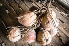 Kokosnüsse für Kokosmilch lizenzfreie stockfotografie