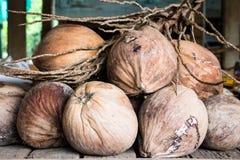 Kokosnüsse für Kokosmilch lizenzfreies stockbild