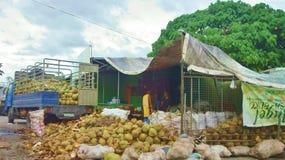 Kokosnüsse für Verkauf Lizenzfreies Stockbild
