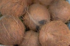 Kokosnüsse für Verkauf auf Markt Gruppe kleines ganzes neues Braun Landwirtschaftshintergrund Beschneidungspfad eingeschlossen Na lizenzfreie stockfotos