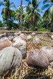 Kokosnüsse gelassen in der Sonne Lizenzfreies Stockbild