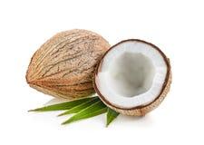 Kokosnüsse lokalisiert auf dem weißen Hintergrund stockfotografie