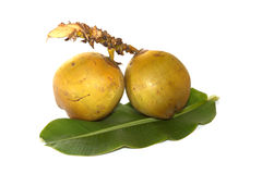 Kokosnüsse lokalisiert auf weißem Hintergrund Lizenzfreie Stockfotos
