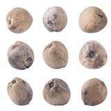 Kokosnüsse lokalisiert auf weißem Hintergrundbeschneidungspfad stockbilder