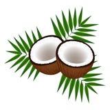 Kokosnüsse mit Blättern Lizenzfreie Stockfotos