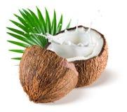 Kokosnüsse mit Milchspritzen und -blatt auf weißem Hintergrund Stockbilder