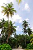kokosnöttree Arkivfoton