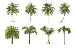 Kokosn?ten och palmtr?d isolerade tr?det p? vit bakgrund, samlingen av tr?d Stora tr?d v?xer i sommar arkivbild