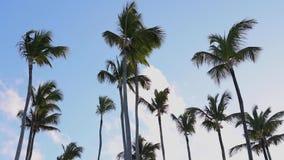 Kokosn?tpalmtr?d och regnb?ge mot bl? tropisk himmel med moln Tropisk semester f?r sommar lager videofilmer