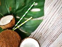 kokosn?tter och tropiskt blad av monsterav?xten med en pappers- sugr?rcoctail p? vit tr?bakgrund Plant lager, b?sta sikt, kopia royaltyfri fotografi