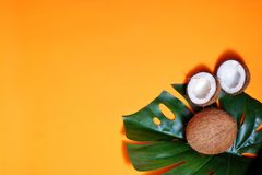 kokosn?tter och tropiskt blad av monsterav?xten med p? orange bakgrund Plant lager, b?sta sikt, kopieringsutrymme laga mat som ?r royaltyfri foto