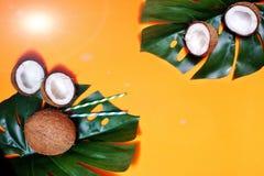 kokosn?tter och tropiskt blad av monsterav?xten med p? orange bakgrund Plant lager, b?sta sikt, kopieringsutrymme laga mat som ?r royaltyfri bild