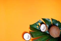 kokosn?tter och tropiskt blad av monsterav?xten med p? orange bakgrund Plant lager, b?sta sikt, kopieringsutrymme laga mat som ?r arkivbilder