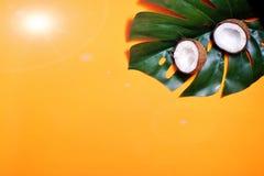 kokosn?tter och tropiskt blad av monsterav?xten med p? orange bakgrund Plant lager, b?sta sikt, kopieringsutrymme laga mat som ?r arkivfoto