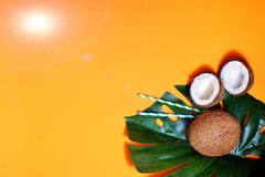 kokosn?tter och tropiskt blad av monsterav?xten med p? orange bakgrund Plant lager, b?sta sikt, kopieringsutrymme laga mat som ?r royaltyfria foton