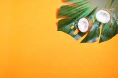 kokosn?tter och tropiskt blad av monsterav?xten med p? orange bakgrund Plant lager, b?sta sikt, kopieringsutrymme laga mat som ?r royaltyfri fotografi