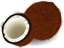 Kokosnoot vector illustratie