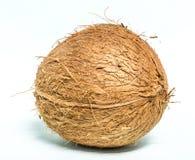 Kokosnoot Royalty-vrije Stock Afbeeldingen