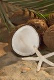 Kokosnoot-1 Royalty-vrije Stock Afbeeldingen