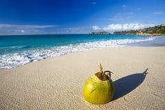 Kokosnoot bij Caraïbisch Strand, Antigua royalty-vrije stock afbeelding