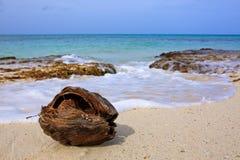 Kokosnoot bij het Caraïbische strand stock afbeeldingen