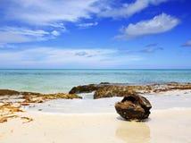 Kokosnoot bij het Cara?bische strand De zomerachtergrond stock afbeelding