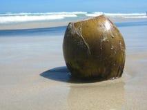 Kokosnoot bij het strand Stock Foto