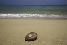 Kokosnoot bij het strand Royalty-vrije Stock Foto's
