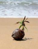 Kokosnoot door de oceaan royalty-vrije stock fotografie