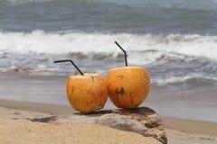 Kokosnoot door het strand Stock Foto