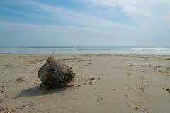 Kokosnoot in een strand Stock Afbeeldingen