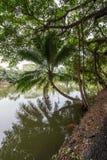 Kokosnoot en banyan bomen rond de vijver in het platteland van Thailand Stock Afbeelding