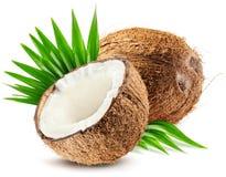 Kokosnoot en blad op witte achtergrond wordt geïsoleerd die stock afbeeldingen