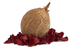 Kokosnoot en droge bloemblaadjes royalty-vrije stock afbeelding