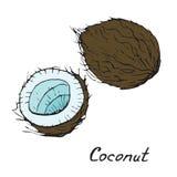 Kokosnoot en gesneden stuk Royalty-vrije Stock Foto