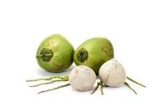 Kokosnoot fruite Stock Afbeeldingen