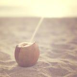 Kokosnoot in het strand Royalty-vrije Stock Foto
