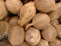 Kokosnoot, kelapa, cacaonoot, niyor, of kokospalm Royalty-vrije Stock Afbeelding