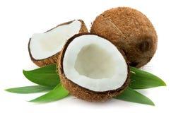 Kokosnoot met bladeren Stock Foto