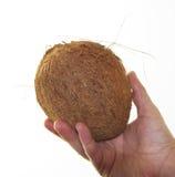 Kokosnoot met een witte achtergrond Royalty-vrije Stock Foto's
