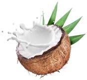 Kokosnoot met melk binnen plons stock afbeelding